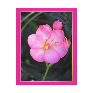 Arte en lienzo Lámina - Flor Rosa Stretched Canvas Print