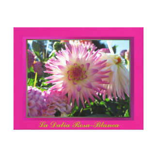 Arte en lienzo Lámina - La Dalia Rosa-Blanca Stretched Canvas Prints