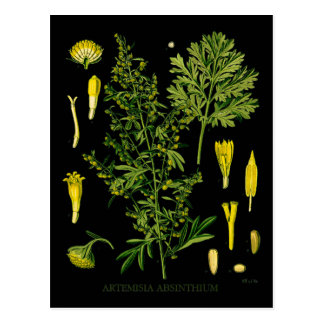 Artemesia Absinthium Postcard