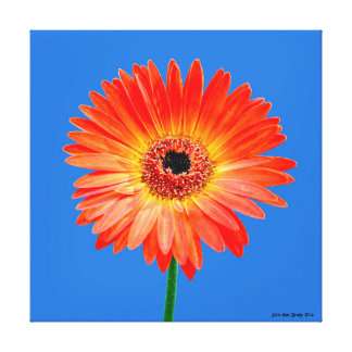 Artful Gerbera Daisy Stretched Canvas Prints