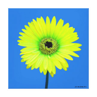 Artful Gerbera Daisy Stretched Canvas Print