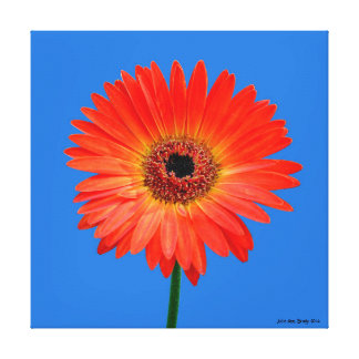 Artful Gerbera Daisy Gallery Wrapped Canvas