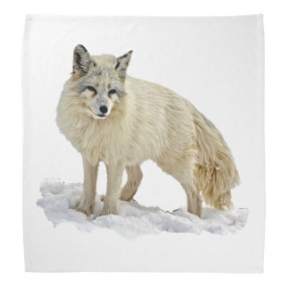 Artic Fox Bandana