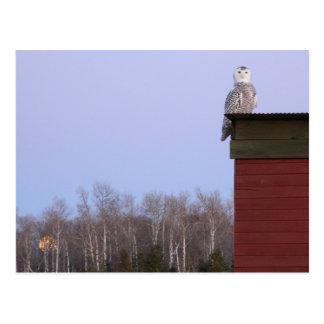 Artic Snowy Owl & Full Moon postcard Customize PC
