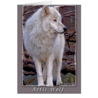 Artic Wolf Card