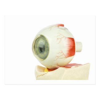 Artificial human eye postcard