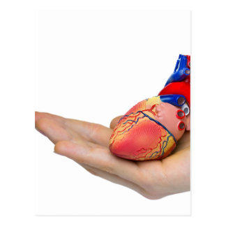 Artificial human heart model on hand postcard
