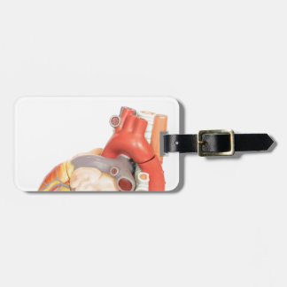 Artificial model of a heart side view luggage tag