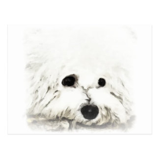 Artistic Bichon head aquarelle Postcard