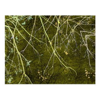 Artistic Nature Composition Postcard