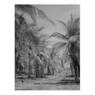 Aruba, Coconut groves Postcard