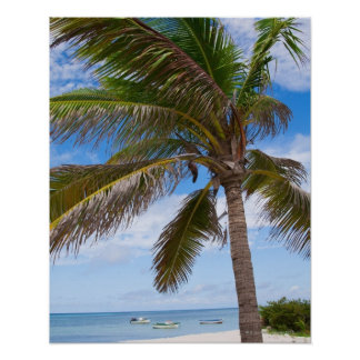 Aruba, palm tree on beach posters