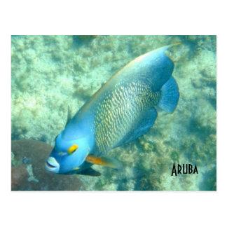 Aruba Underwater photo of Fish Postcard