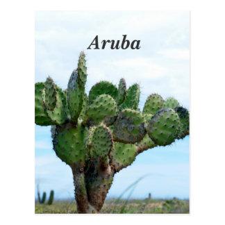 Aruban Cactus Postcard