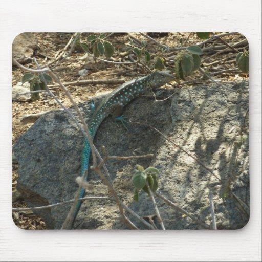 Aruban Whiptail Lizard Mousepad
