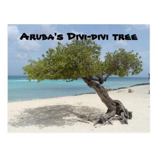Aruba's Divi-divi tree postcard