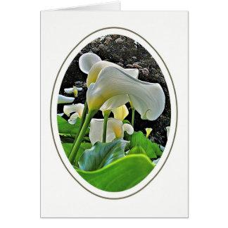 Arum Lilies Blank Greeting Card