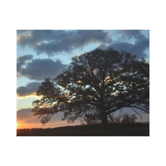 As night falls, a tree stands alone canvas print