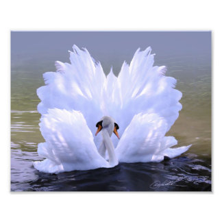 As One, Swans by Danny Hahlbohm Photo Print