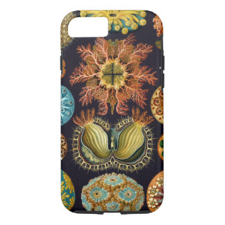 Ascidiae by Ernst Haeckel, Vintage Marine Animals iPhone 8/7 Case