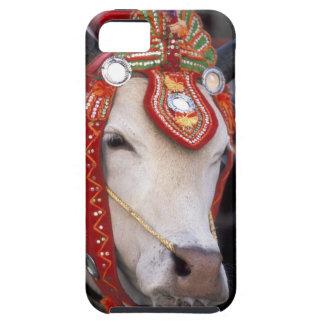 Asia, Burma (Myanmar) Shinbyu ceremony. Bull iPhone 5 Covers