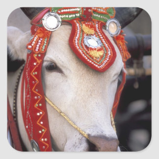 Asia, Burma (Myanmar) Shinbyu ceremony. Bull Square Sticker