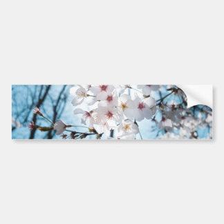 Asia Cherry Blossom Bumper Sticker