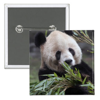 Asia, China Chongqing. Giant Panda at the 15 Cm Square Badge