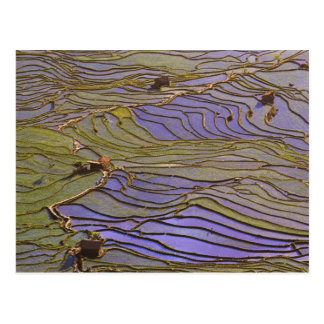 Asia, China, Yunnan Province, Yuanyang. Flooded Postcard