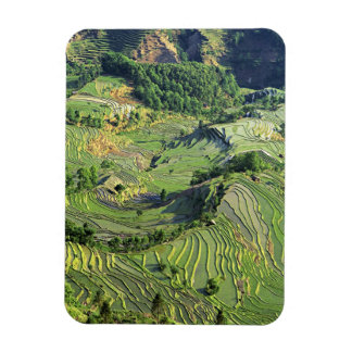 Asia, China, Yunnan, Yuanyang. Pattern of green Magnet