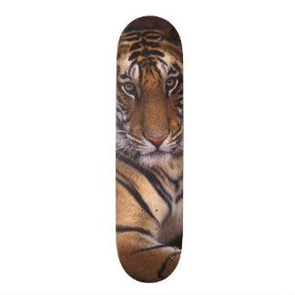Asia India Bandhavgarth National Park Skateboards