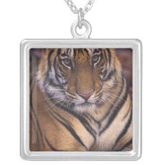 Asia, India, Bandhavgarth National Park, Square Pendant Necklace