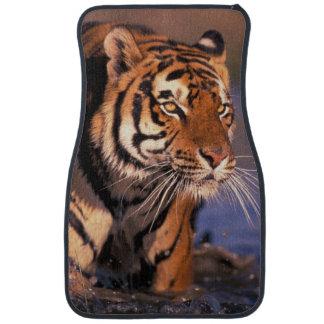 Asia India Bengal tiger Panthera tigris Car Mat