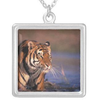 Asia, India, Bengal tiger Panthera tigris); Square Pendant Necklace