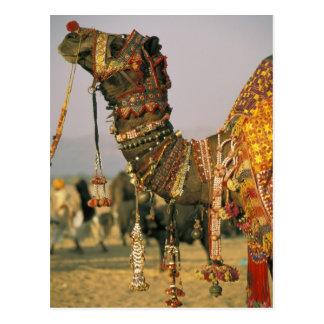 Asia India Pushkar Camel Shamu Pushkar Postcard
