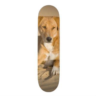 Asia, India, Rajasthan, Jaisalmer, Thar Custom Skate Board