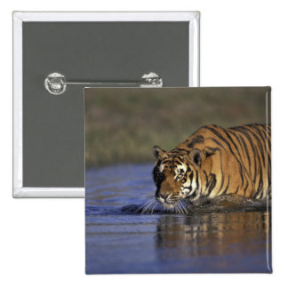 ASIA, India Tiger walking through the water 2 15 Cm Square Badge
