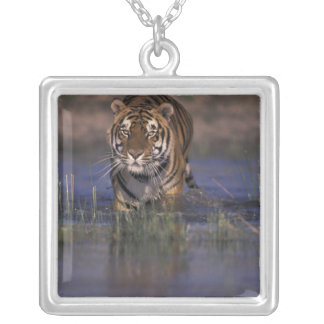 ASIA, India Tiger walking through the water Square Pendant Necklace