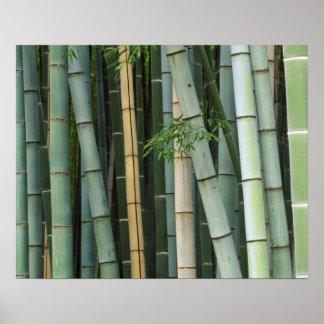 Asia, Japan, Kyoto, Arashiyama, Sagano, Bamboo Poster