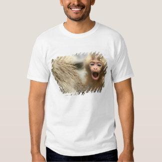 Asia, Japan, Nagano, Jigokudani, Snow Monkey Tee Shirts