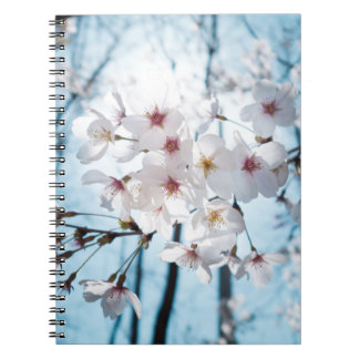 Asia Japanese Cherry Blossom Notebooks