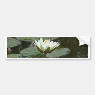 Asia Lotus Flower Bumper Stickers