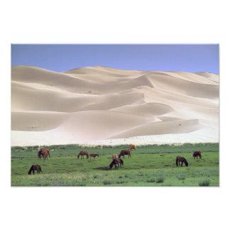 Asia, Mongolia, Gobi Desert. Wild horses. Photo Art