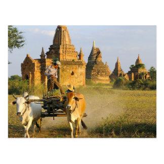 Asia, Myanmar (Burma), Bagan (Pagan). A cart is Postcard
