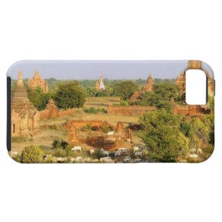 Asia, Myanmar (Burma), Bagan (Pagan). Cows pass iPhone 5 Cover