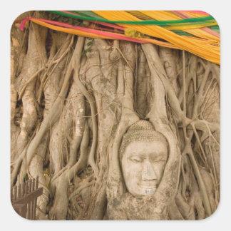 Asia, Thailand, Siam, Buddha in tree ruts at Square Sticker
