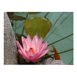 Asia, Vietnam. Water lily in a temple pond Postcard
