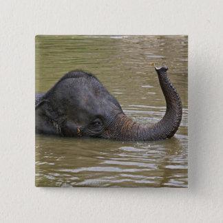 Asian Elephant bathing, Thai Elephant 15 Cm Square Badge