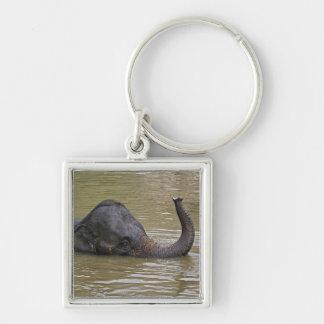 Asian Elephant bathing, Thai Elephant Silver-Colored Square Key Ring