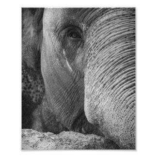 Asian Elephant Face Photo
